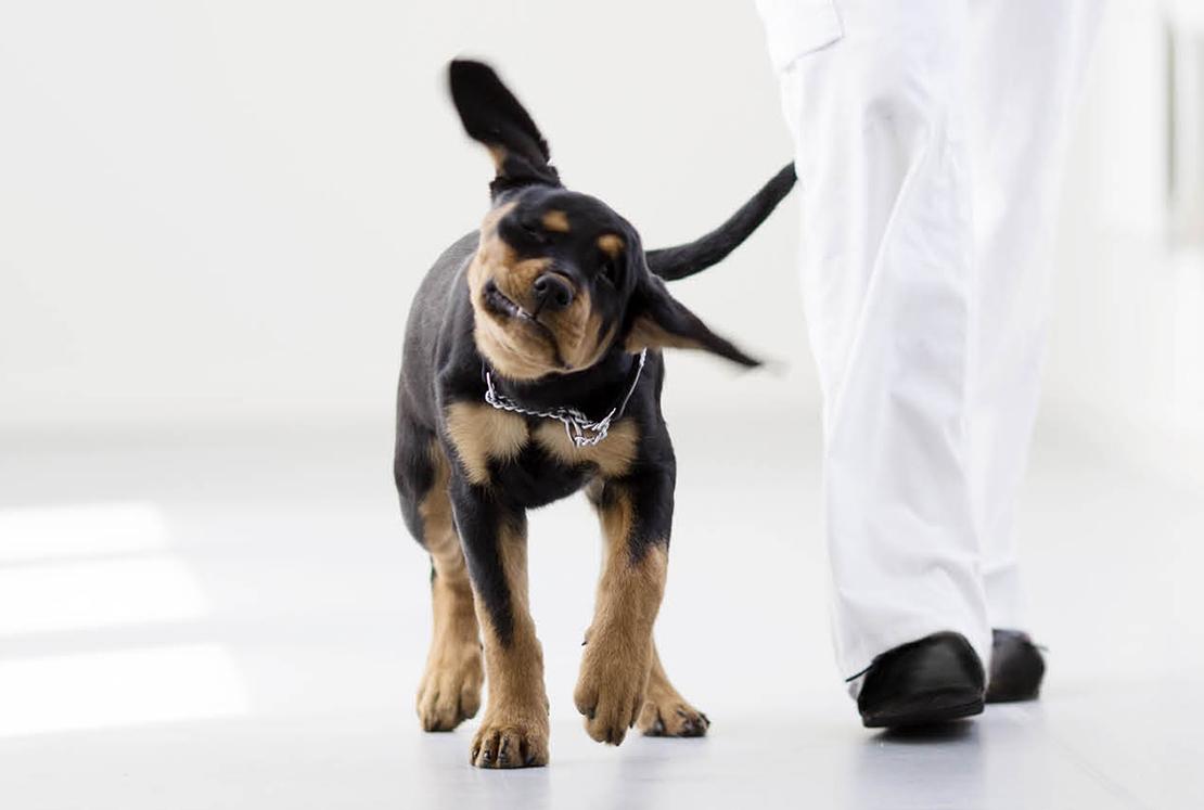 ear-infections-in-pets.jpg