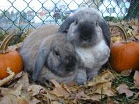 bunny's-and-tree-028.jpg